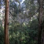 Melbourne Day Trips: Dandenong Ranges & Ballarat