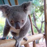 Work and travel in Australia on the Work and Holiday Visa: Applying for the WHV online