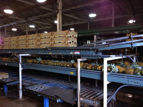 maui-pineapple-farm-facility