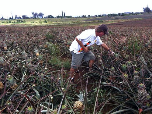 maui-pineapple-tour-eat