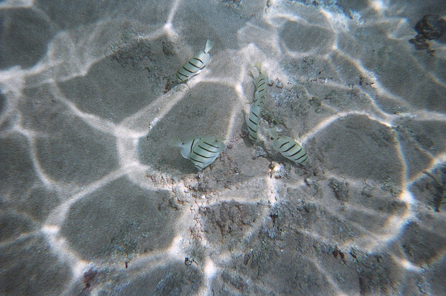 two-steps-hawaii-snorkeling