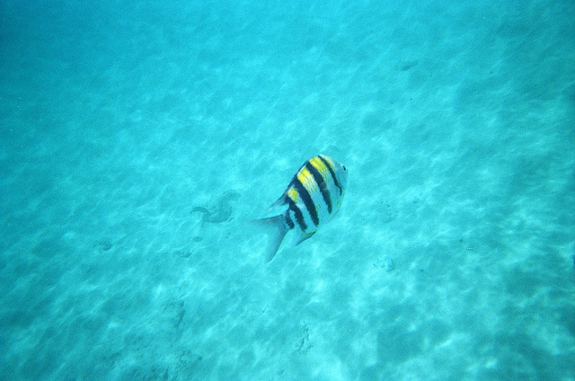 two-steps-snorkeling