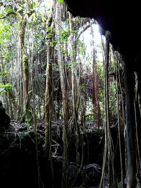 road-to-hana-cave-2