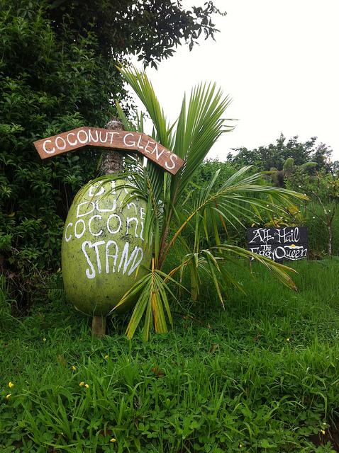 road-to-hana-coconut-glens