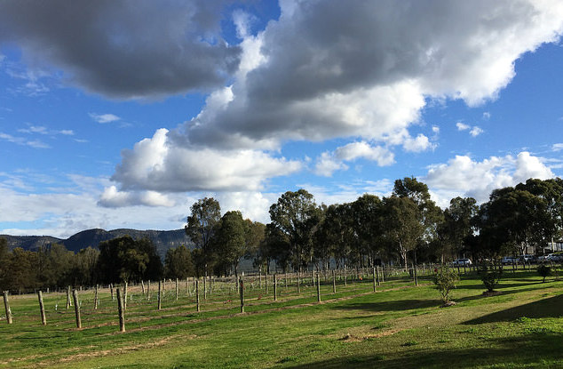 Hunter Valley vineyard views